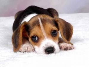 mascotas-online-pettito